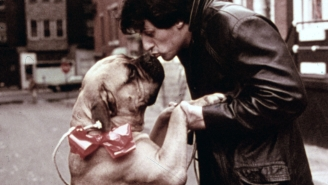 Twitter Thread Details Sylvester Stallone's Wild Ride Before 'Rocky,' Including Selling His Dog And Sleeping In Bus Terminal