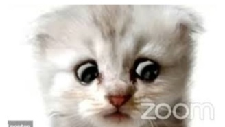 'Zoom Cat Lawyer' Gets Milkshake Ducked And Canceled Less Than 24 Hours After Going Viral