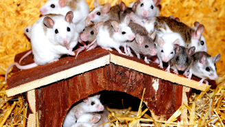 Millions Of Mice Are Terrorizing Australia, Looks Like Something Out Of A Horror Film