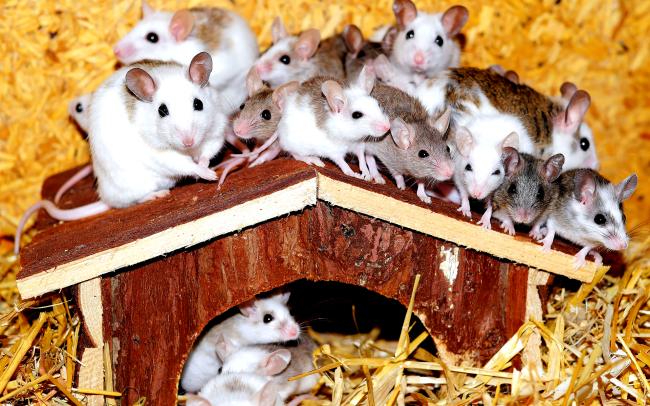 Footage Of Mice Plague Terrorizing Australia Like A Nightmare