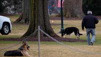 Biden's Dogs Kicked Out Of The White House For Biting Incident