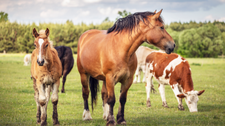 Do NOT Slaughter Horses Illegally In Front Of Richard Couto, Florida's Horse Meat Vigilante