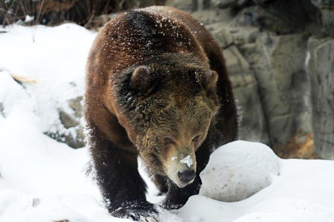 cocaine bear movie