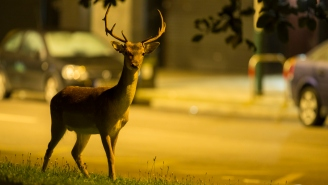 Look At These Deer Running Full Speed Into Some Guy's House Like A Bunch Of Stupid Animals