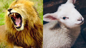 What Does 'In Like A Lion, Out Like A Lamb' Even Mean? Here's Why The Phrase Is Used To Describe The Weather In March