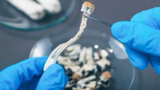 The Co-Founder Of A Company Developing A Way To Vape Magic Mushrooms Explains Why Psychedelics Are On The Verge Of Becoming Mainstream