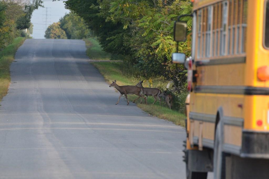 deer jumps through school bus window