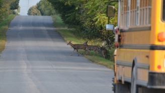 Footage From Inside A School Bus Shows Moment Deer Comes Flying Through Windshield Shocking Everyone Onboard