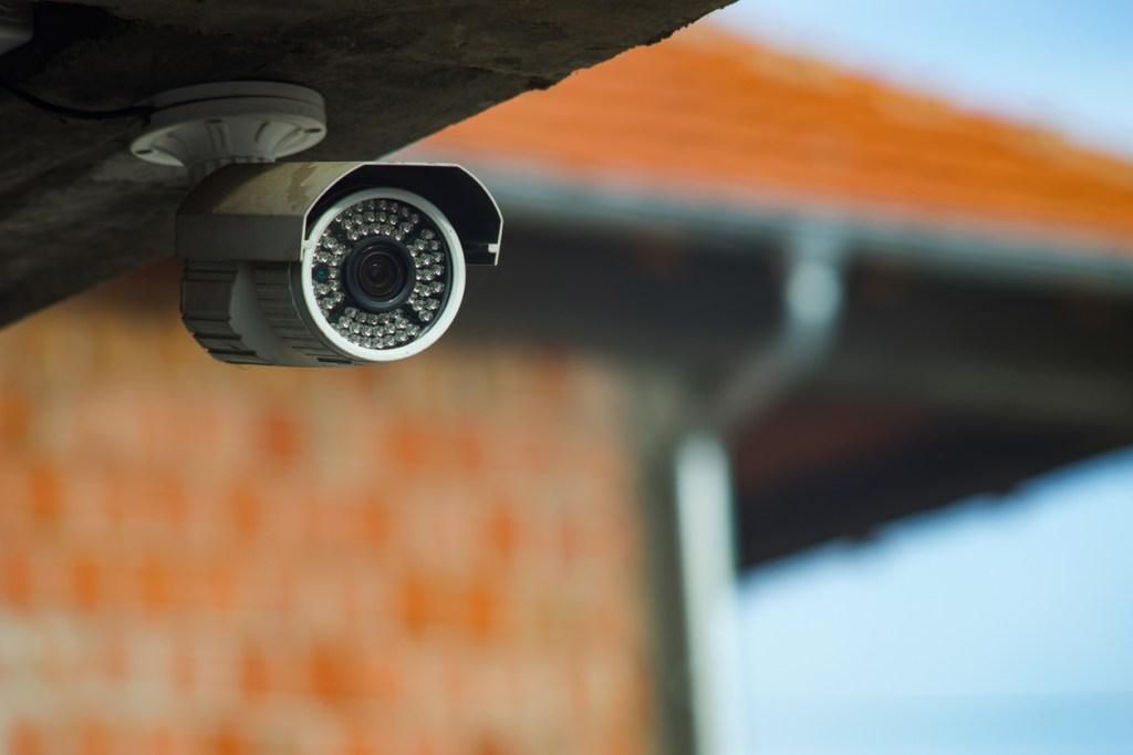 home outdoor security camera captures baby dinosaur