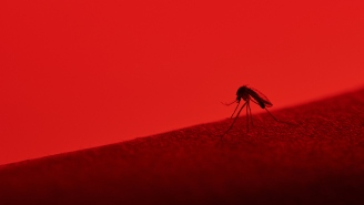 BILLION Genetically Engineered Mosquitoes To Be Released In Florida; Opponents Call Experiment A 'Pandora's Box'