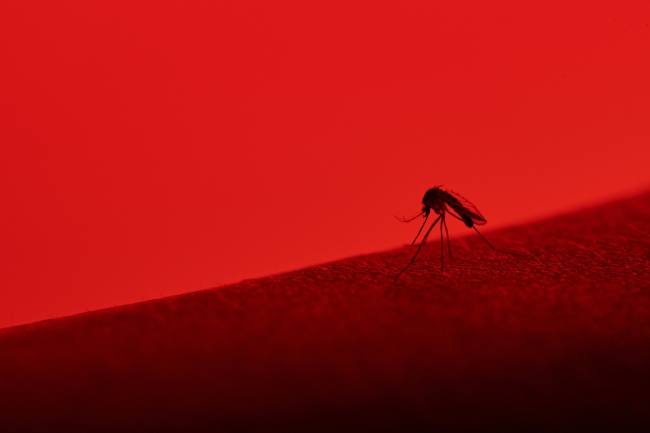 Genetically modified mosquitos florida outrage and terrorism