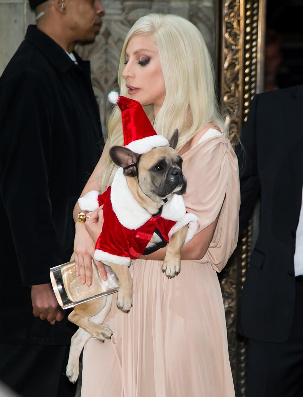 Lady Gaga and Bulldog