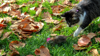 Chicago Regularly Releases Feral Cats Into The Streets To Fight City's Rat Infestation