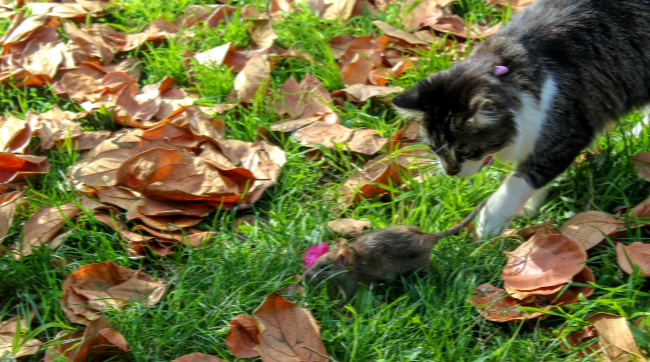 Chicago Releases 1000 Feral Cats To Fight The Citys Rat Infestation