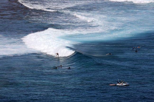 Surfing Shark Ocean