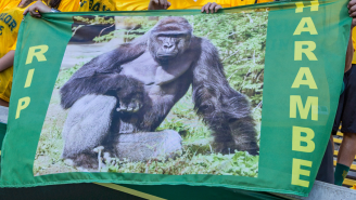 Minor League Baseball Team Auctioning Off Custom Harambe Jerseys It Wore In Honor Of Our Sweet, Sweet Prince