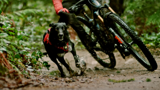 These Insanely Athletic Trail-Running Dogs Are A Heartwarming Reminder That They Really Are A Man's Best Friend