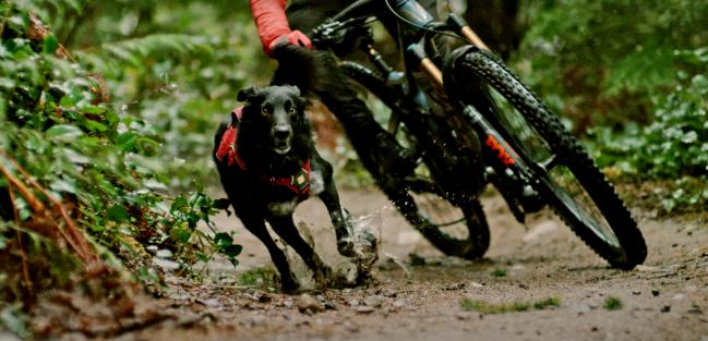 Shimano Dog Mountain Biking