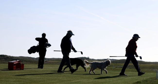 man arrested shooting killing dog that stole golf ball