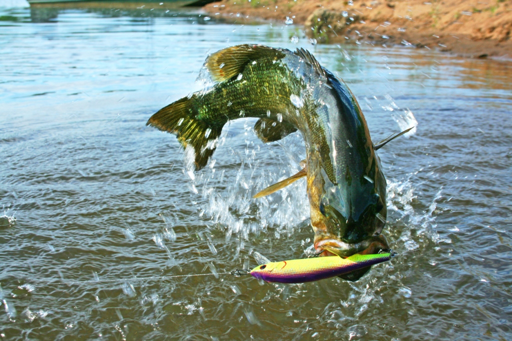 meanmouth bass fishing world record