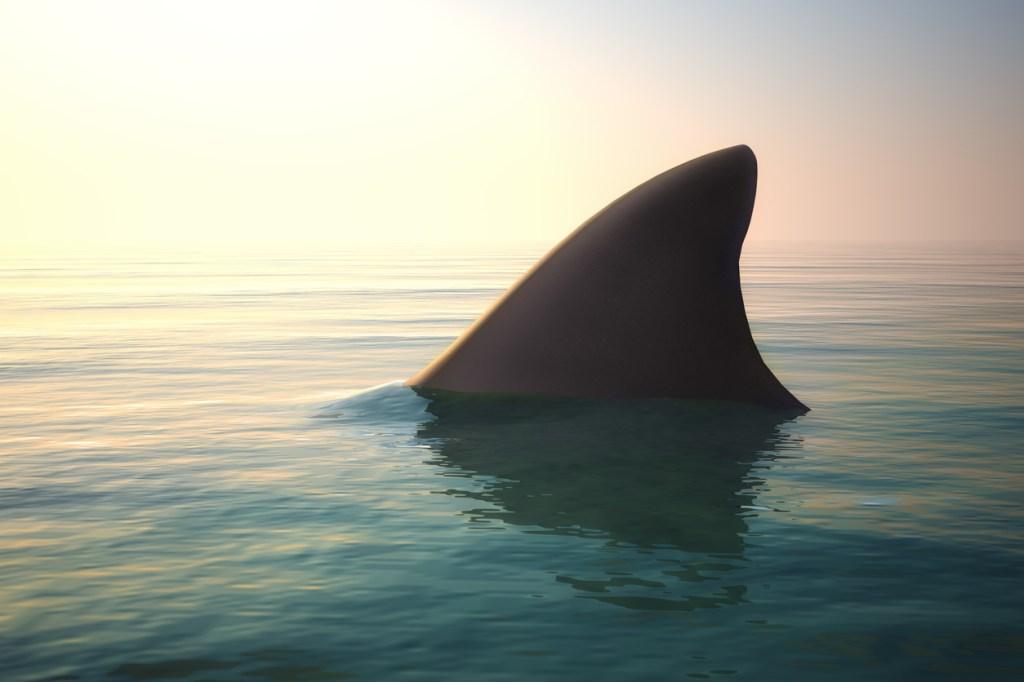 spinner shark state fishing record south carolina
