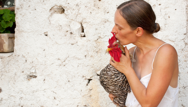 CDC stop kissing chickens Salmonella warning