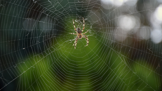 Australia Is In The Midst Of A 'Spider Apocalypse' As Gigantic Webs Blanket The Countryside
