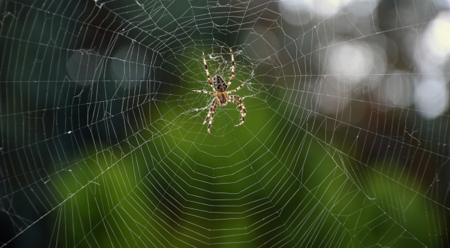 Australia In A Spider Apocalypse As Giant Webs Blanket The Countryside