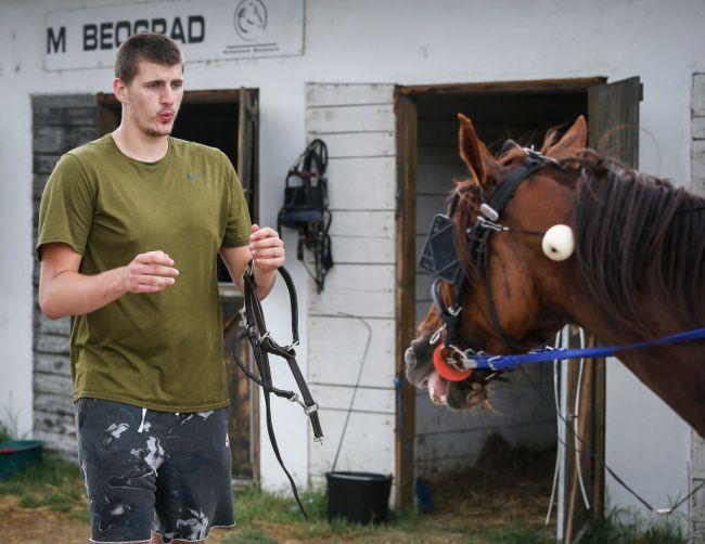 Nikola Jokic Horse