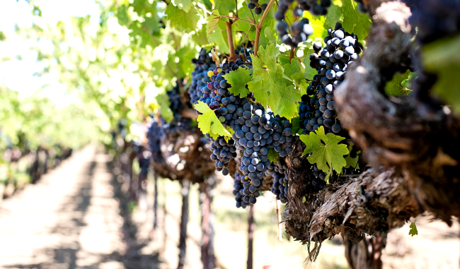 Man Rescued From Giant Vineyard Fan After Being Trapped For 2 Days