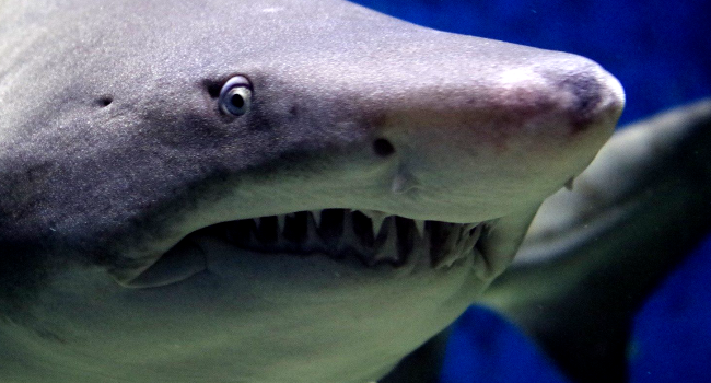 Surfer Survives Severe Shark Attack With 10 Teeth Marks On His Leg