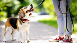Twitter Drags Journalist Who Wrote About Euthanizing Her Healthy But Disturbed 6-Year-Old Beagle