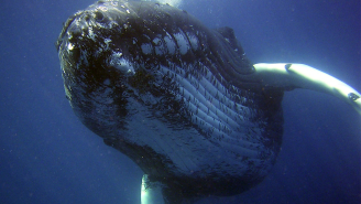 Experts Have Evidence The Fisherman Who Claims He Was Swallowed By A Whale Is A Big Fat Liar