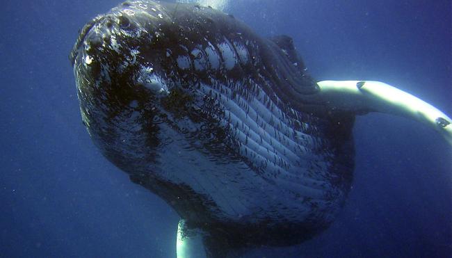 fisherman swallowed by whale liar