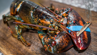 Could Getting Lobsters Super Stoned Before Cooking Make Their Deaths More Humane? A New Study Tried To Find Out