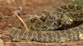 Mountain Bikers Accidentally Crash Into A Rattlesnake Den And Call An Expert To Get Their Bikes Back