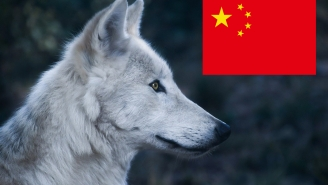 Wolves Chase Actors, Run Through The Audience As Part Of Live Show In China
