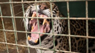 Inquisitive Child Gives Hilarious Interview After 'Florida Man' Sticks Hand In Jaguar's Cage At Zoo