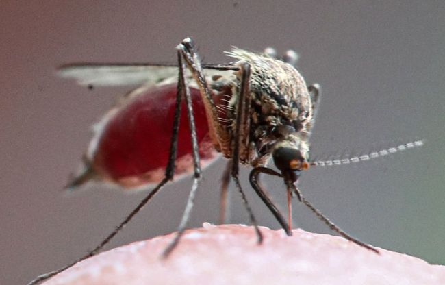 Russia Tornado Mosquito