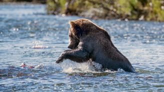 This Russian Bear Going Fishing With His Owner Is The Happiest Thing You'll See Today
