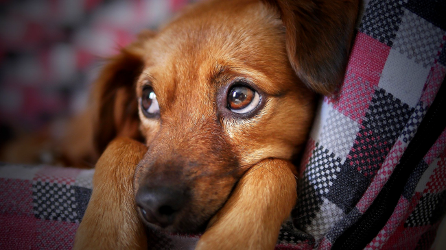 Science Proves Dogs Will Ignore You If They Know You Are Lying To Them