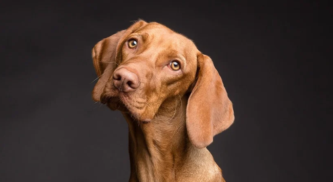Science Proves Dogs Will Ignore You If They Know You Are Lying