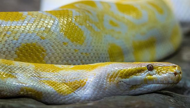 python snake bites man on toilet