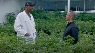 Former NBA Player Al Harrington Aiming To Create '100 Black Millionaires' Through Cannabis Industry