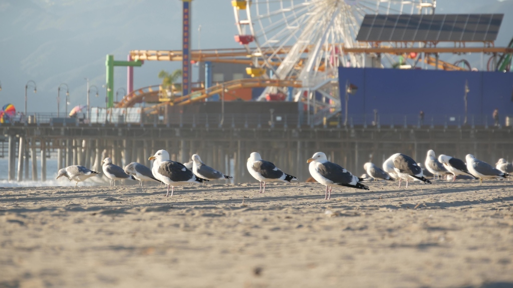 girl hit by seagull on Morey's Pier Springshot ride