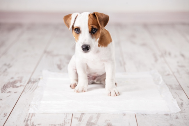 Why do dogs circle before they poop, science says magnetic fields could be to reason