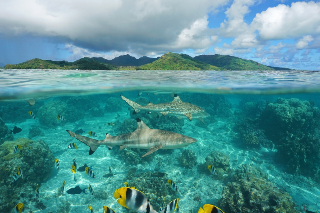 Jackass star Sean Poopies McInerney shark bite story shark week shark attack