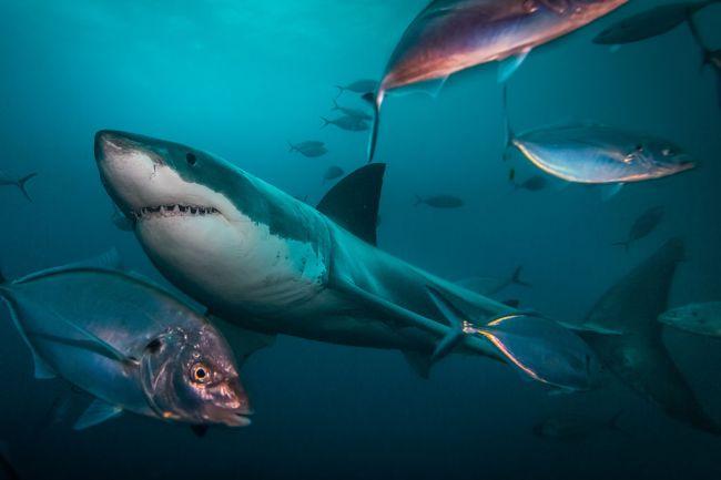 shark attack shark interaction