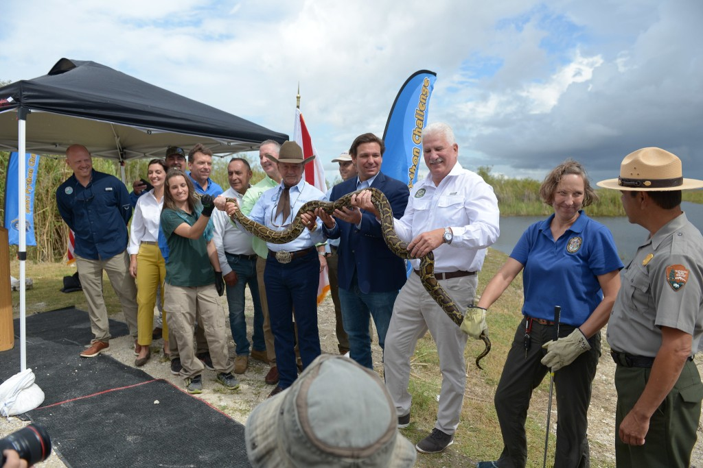 2021 Florida Python Challenge results huge snakes caught