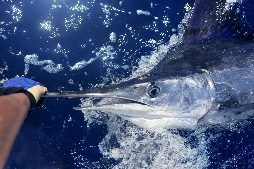 2021 White Marlin Open Results Winners Payouts